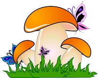 Mushroom. Illustration with mushroom. grass and butterfly Royalty Free Stock Photo