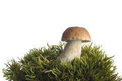 Mushroom. Close -up on white background Stock Photos