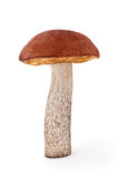 Mushroom. Orange-cap mushroom closeup, isolated on white background Royalty Free Stock Image