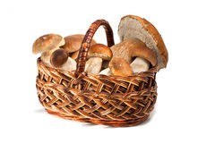 Mushroom. Raw mushrooms in a basket, isolated Stock Photo