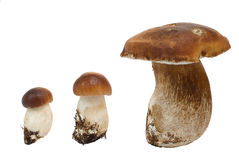 Mushroom Royalty Free Stock Photography