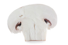Mushroom. A section of mushroom isolated over white Royalty Free Stock Photos