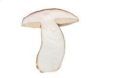 Mushroom. Slice of mushroom, isolated on white Royalty Free Stock Photo