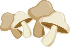 Mushroom Royalty Free Stock Photos
