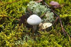 Mushroom Stock Photo