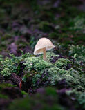 Mushroom. In the taiga wood Royalty Free Stock Images