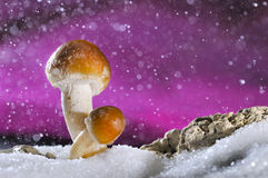 Mushroom. Abstract with snow and water drops Stock Images