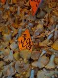 mushroom Stock Photos