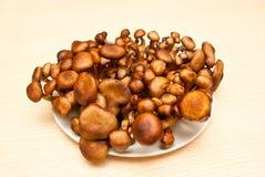 Mushroom. Edible mushrooms with excellent taste, Armillaria ostoyae Royalty Free Stock Images
