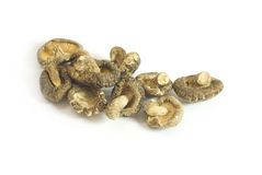 Mushroom. Isolated dried mushroom close up photo stock image