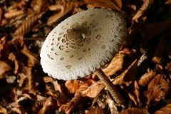 Mushroom. Shallow depth stock image