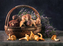 Mushroom. Ceps in a basket in an environment of a heather Royalty Free Stock Photography