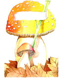Mushroom. S with dried leaves and card Royalty Free Stock Photo