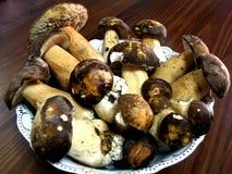 Mushroom. – (Boletus edulis) - king of pore fungi stock images