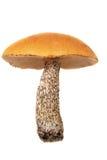 Mushroom. Mushroom isolated on white background Royalty Free Stock Photo