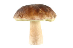 Mushroom. A mushroom (boletus edulis) isolated (with clipping path Royalty Free Stock Photos
