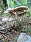mushroom1 image libre de droits
