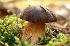 A Mushroom Stock Photography