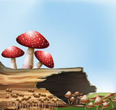 A mushroom above the stump Royalty Free Stock Image