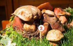 Mushroom Agaricus essettei Stock Photos
