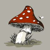 Mushroom Amanita with grass Royalty Free Stock Image