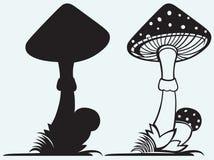 Mushroom Amanita with grass Royalty Free Stock Image