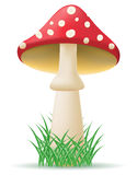 Mushroom amanita vector illustration Stock Images
