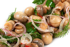 Mushroom appetizer Stock Photography
