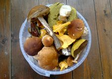 Mushroom Assorted Royalty Free Stock Images