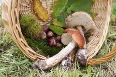 Mushroom in autumn Stock Photos