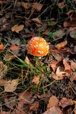 Mushroom in the autumn forest Royalty Free Stock Image