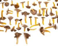 Mushroom Background Stock Photo
