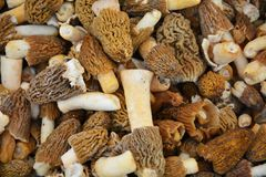 Mushroom background Royalty Free Stock Photo