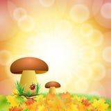 Mushroom background Royalty Free Stock Images