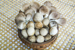 Mushroom in bamboo basket Stock Images