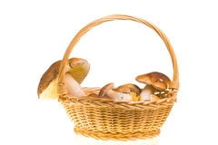 Mushroom basket Royalty Free Stock Photo