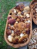 A mushroom basket. A basket full of mushrooms royalty free stock photos