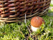Mushroom and basket Royalty Free Stock Photos