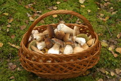 Mushroom basket Stock Photo