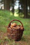 Mushroom basket Stock Image