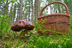 Mushroom and basket Stock Image