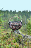 Mushroom basket full in forest Stock Image