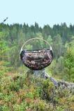 Mushroom basket full in forest Stock Image