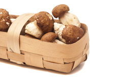 Mushroom in basket Stock Photos
