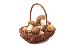Mushroom in basket Stock Photo