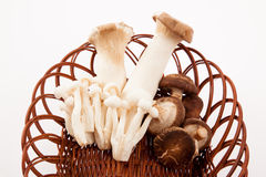 Mushroom in a basket Stock Photo