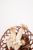 Mushroom in a basket Stock Photos
