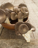 Mushroom Bhutan Royalty Free Stock Photo