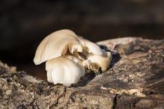 Mushroom bites Stock Images