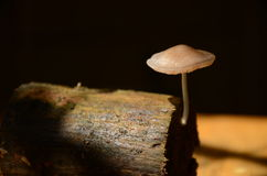 Mushroom on black background. Stock Photo